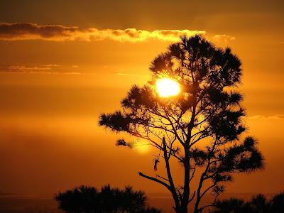 http://4.bp.blogspot.com/_pvvRnOE6mN8/S1O99oswO2I/AAAAAAAAAFg/q9cJZRrTBfk/s400/nature2.jpg