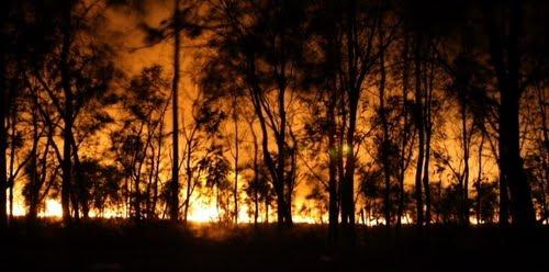 Kebakaran Hutan Kalimantan Tengah