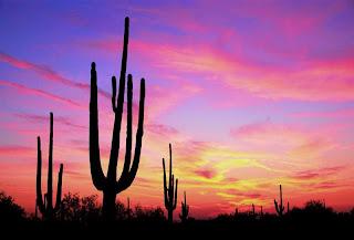 external image cactus_sunset_whop.jpg