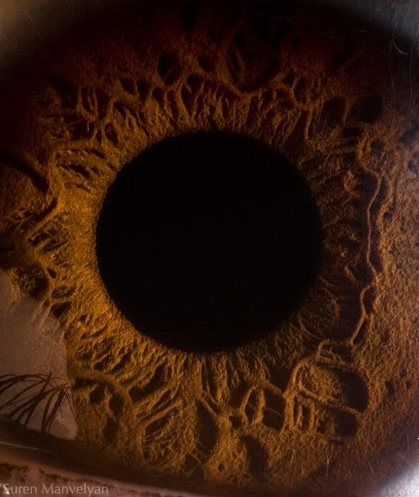 Randomnies: Eye Macro Photography
