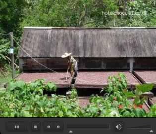 Hotel Chocolat Rabot Estate Cocoa Plantation
