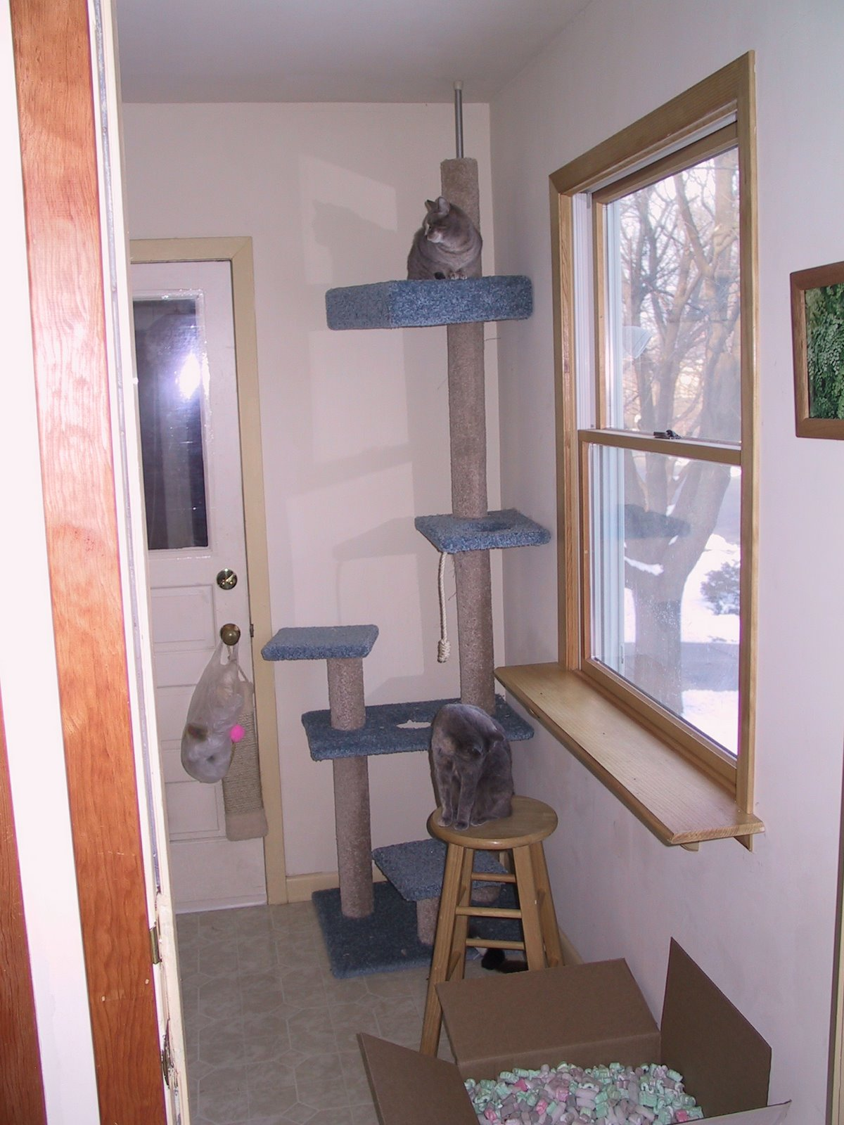 [Cat+post+room]