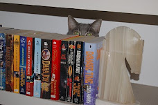 Cats Like Books Too!