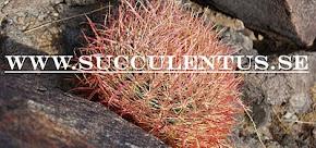 Min websida om Suckulenter och andra Exotiska växter