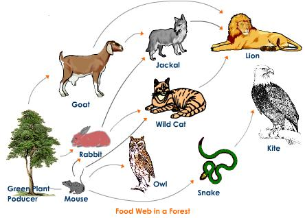 food chain examples. diagram of food chain and food
