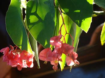 Flor em cacho