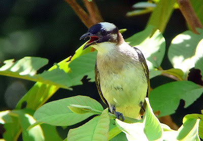 digiscoping with Leica D-Lux3 , Pentax 75SDHF