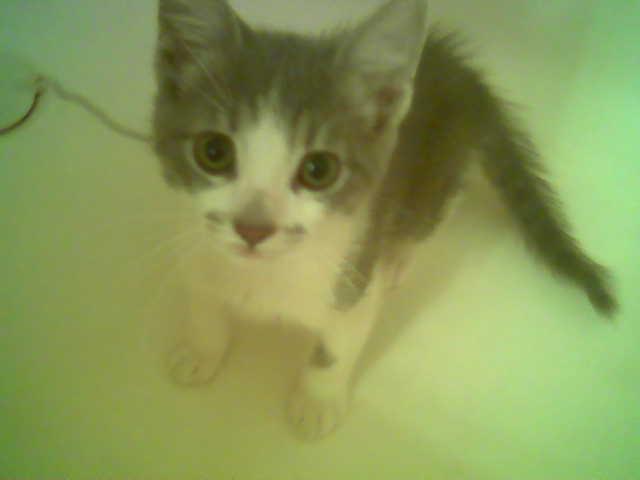 [kitty]