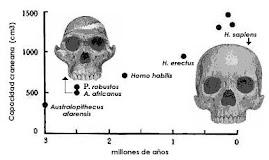 la hipomorfosis