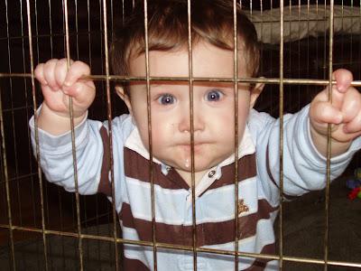 http://4.bp.blogspot.com/_q6ACXYa0lHE/R6iwAXpQl4I/AAAAAAAABEM/EC1ON3r_uv4/s400/HappyJailBird5.JPG