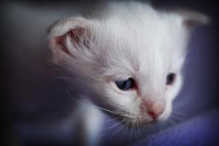 7940 Kittens
