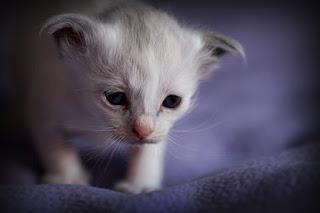 7950 Kittens