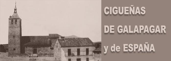 CIGÜEÑA DE GALAPAGAR