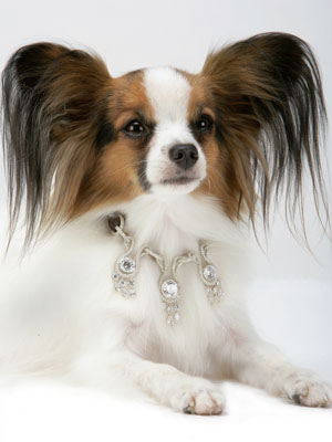 World S Most Expensive Dog Collar
