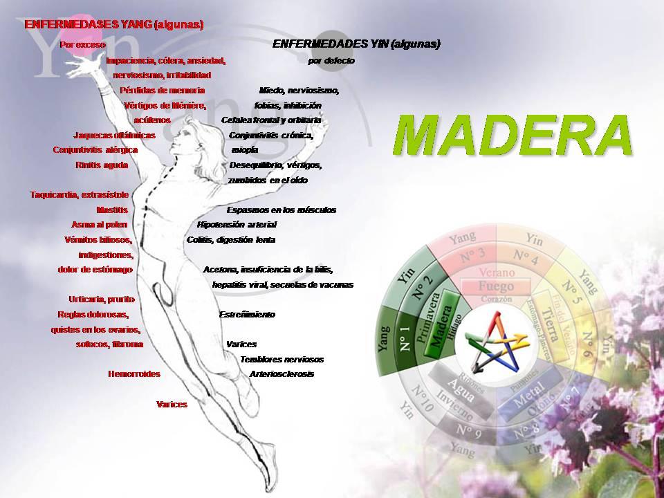ESCUELA MADERA Elemento+MADERA
