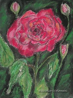 Spring Beauty Rose by Cori Solomon