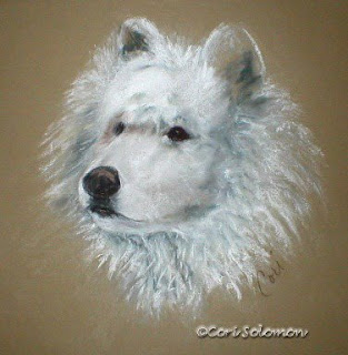Arctic Majestry - Samoyed By Cori Solomon