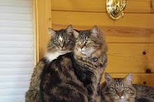 Oscar, Raku & Delly