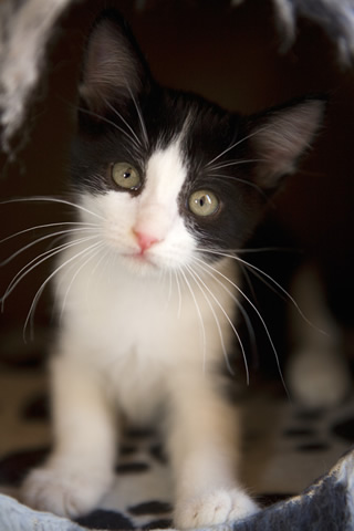 cute black and white cats and kittens