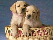 C.A.S.A.: Adopta una mascota