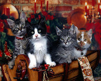 Christmas kittens Wallpapers