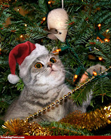Merry Christmas kittens Wallpapers