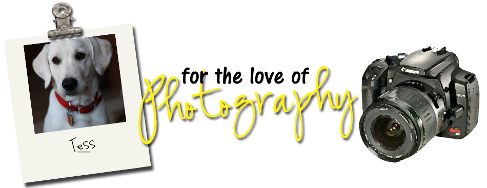 SSH Photography