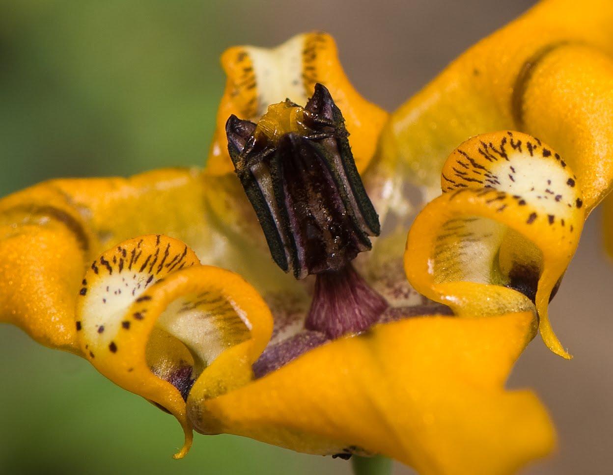 Confira belas imagens de flores de jardim RIC Rural RIC  - Imagens De Flores No Jardim