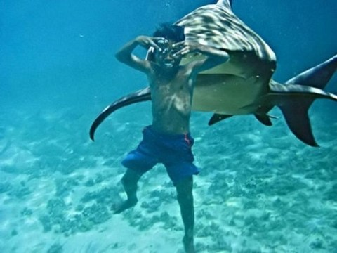 Prolonging me : Time To Speak UP !!: 15 of the Worst Shark Attacks Ever......!!