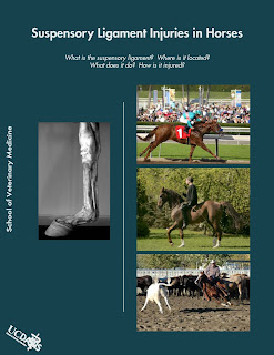 Suspensory ligament injuries in horses Suspensory+ligament+injuries+in+horses_P%C3%A1gina_01