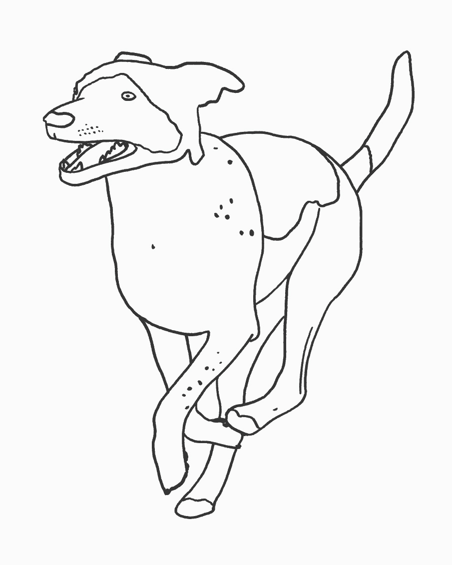 rough collie coloring pages - photo#26