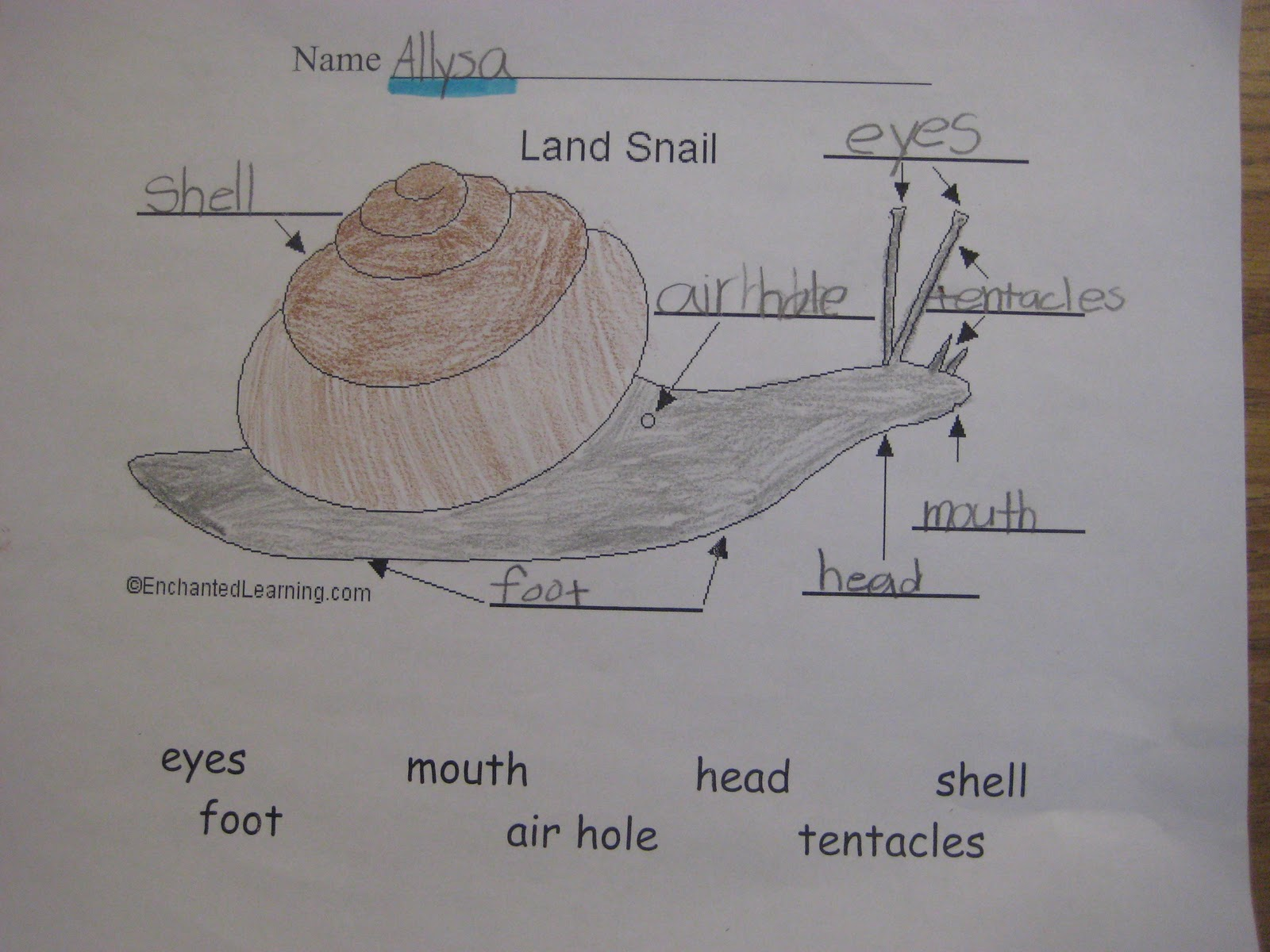Finally In First  Snail Study