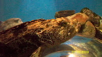 Some sort of aquatic creature