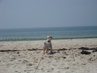 George at St. George Island