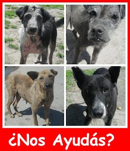 En San Cayetano y Villa Auchan muchos animales esperan tu colaboración