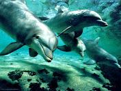 delfines.