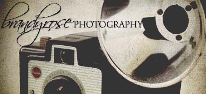 BrandyRose Photography