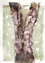 Birch layers