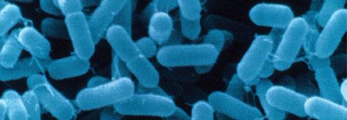 Bacterial+meningitis+virus
