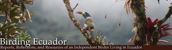 Birding Ecuador
