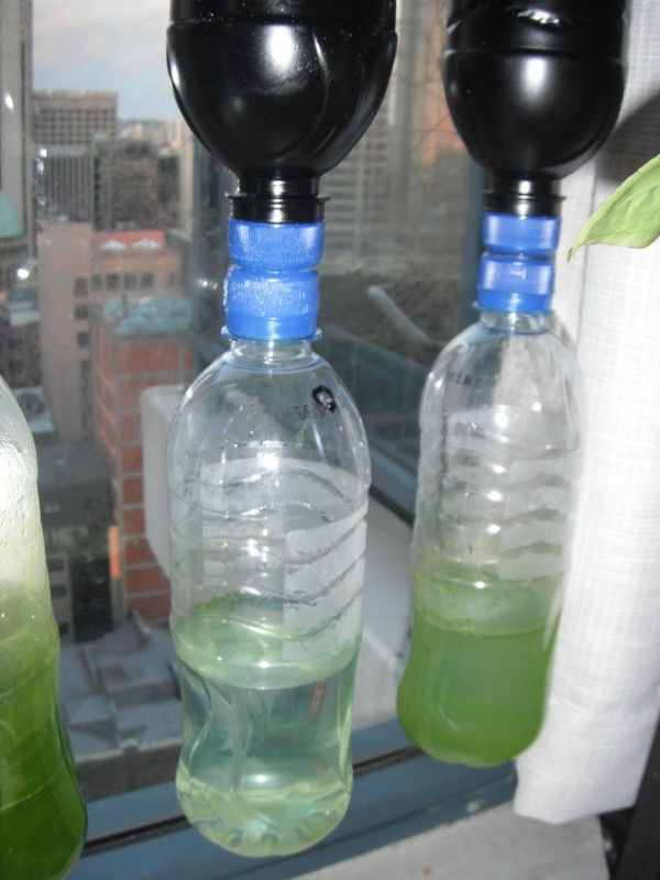 urban green survival bottle garden
