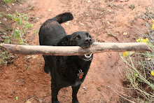 Bark softly and carry a big stick - RIP sweet Zadie