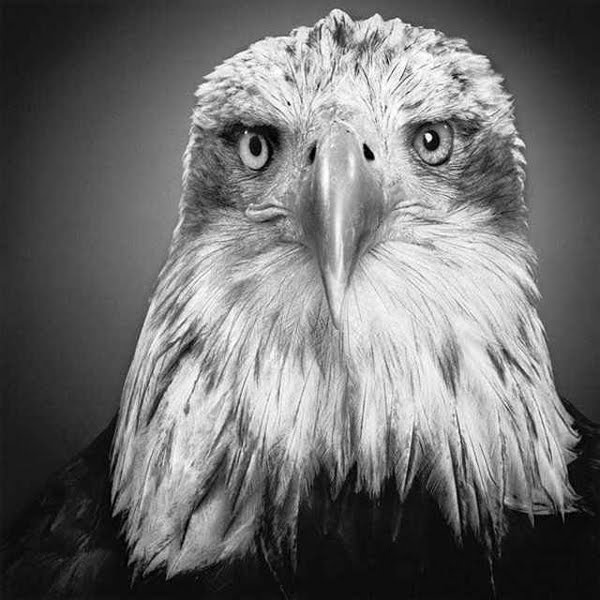 MULTIPLE Amazing Pencil Drawings Of Animals That Look Like Photographs