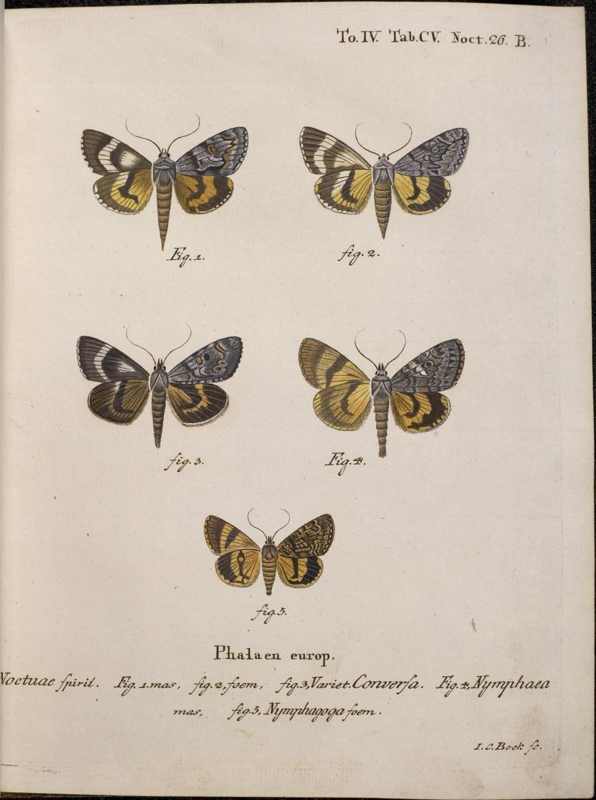 Die Schmetterlinge by EJC Esper, 1786 - Nymphagoga