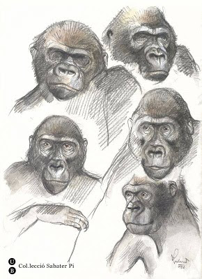 drawings of gorillas