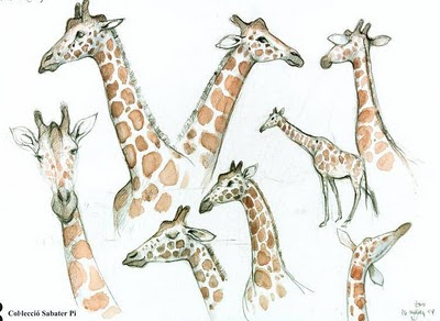 giraffe sketches