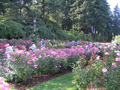 The most beautiful rose gardens Travelization