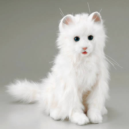 Bahaya Bulu Kucing Bagi Kesehatan Fantasianara