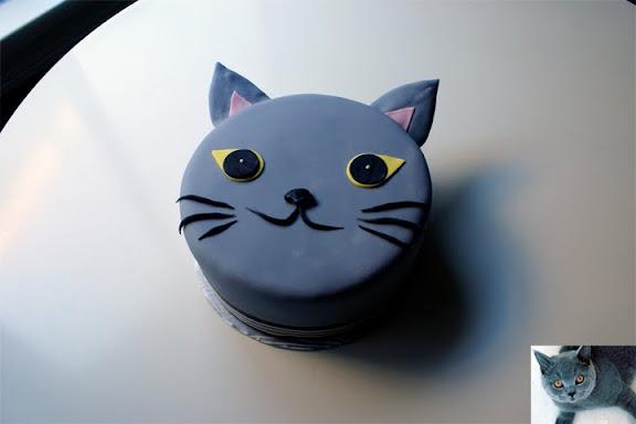 Grey Cat Coco Cake Land Cake Tutorials Cake Recipes