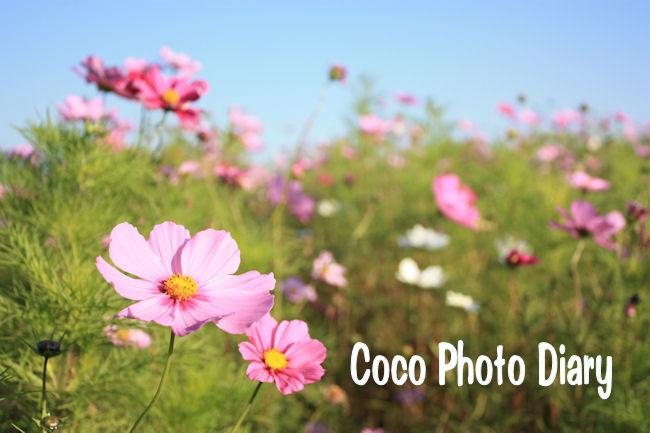 coco日記 ~coco Photo Diary~